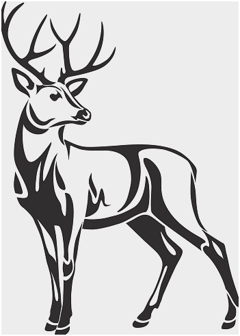 351x491 Deer Antler Vector Fresh Whitetail Deer Skull And Antlers Stock