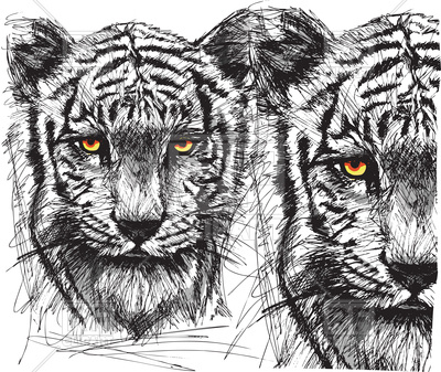 400x337 Sketch Of White Tiger Vector Image Vector Artwork Of Plants And