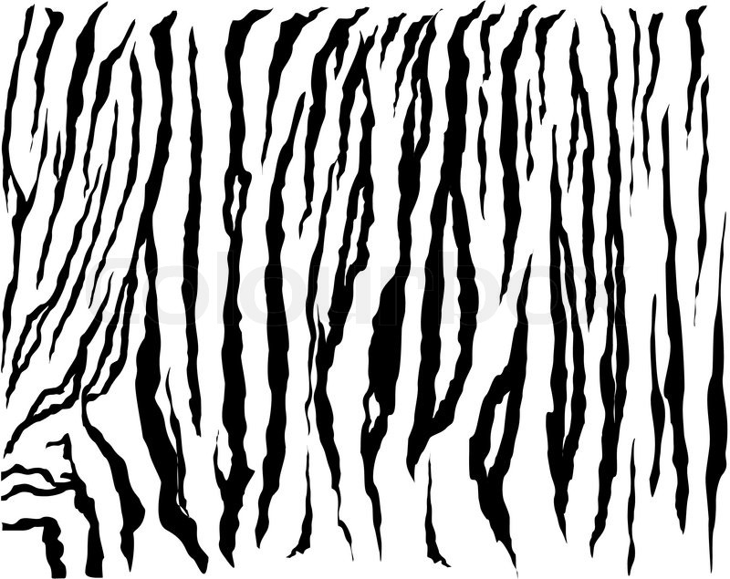 800x635 Tiger, Leopard, Cheetah Animal Skin,white Tiger Vector