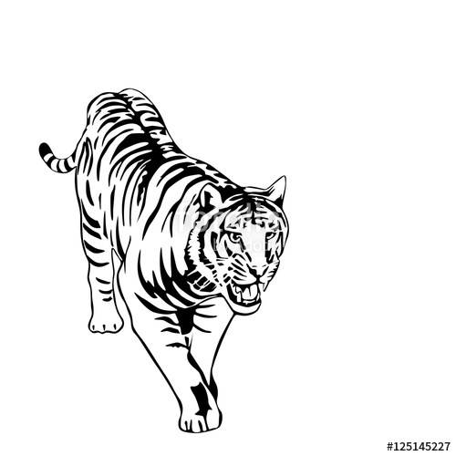 500x500 Black And White Tiger Vector Illustration Stock Image And Royalty