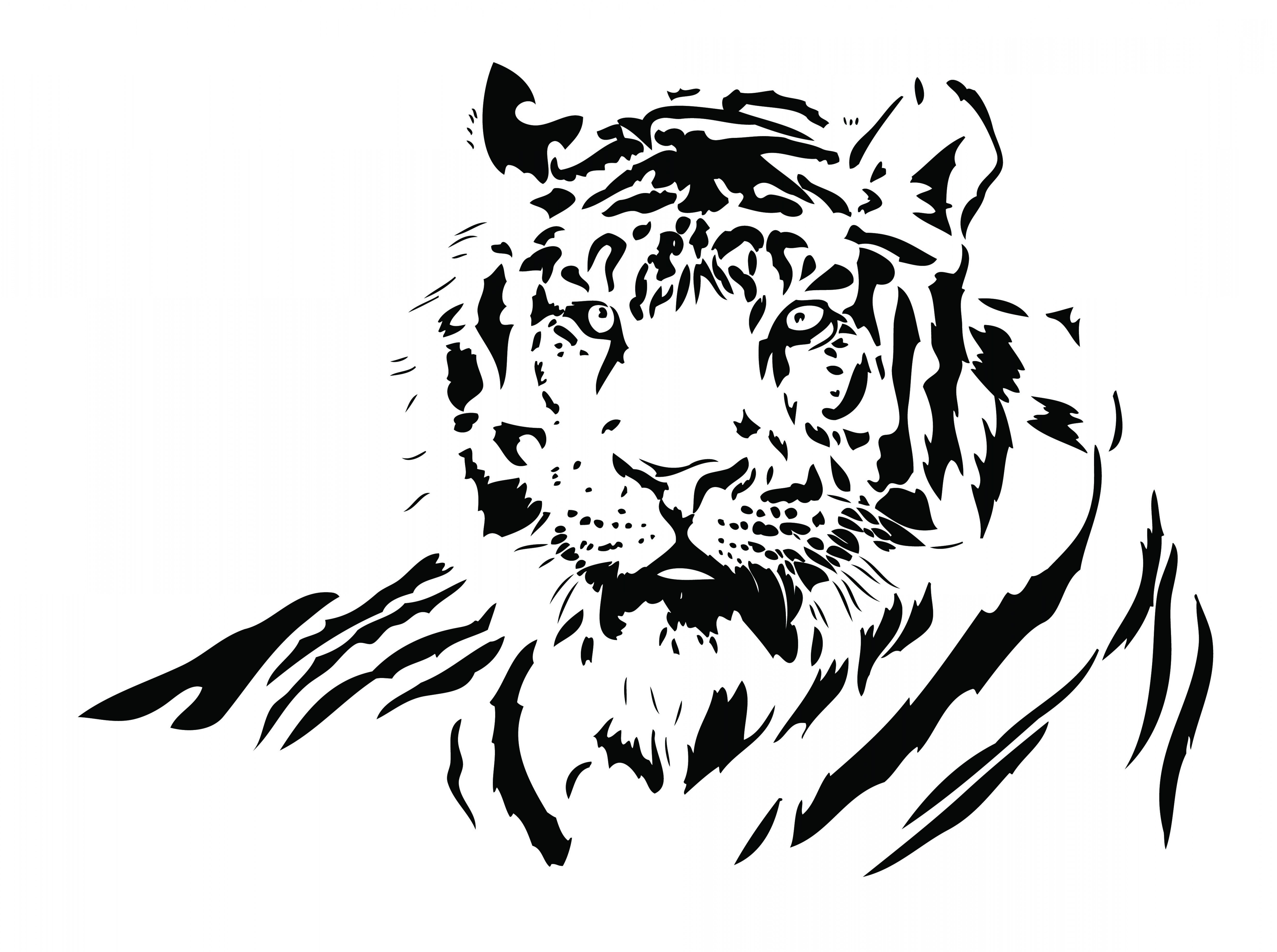 5276x3936 Both Black And White Tiger Vector Shopatcloth