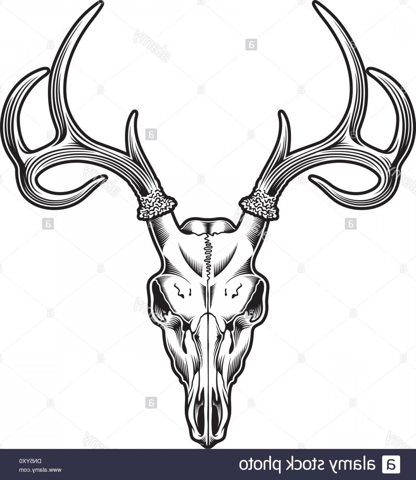 1446x1668 Stock Photo Deer Skull Vector Shopatcloth