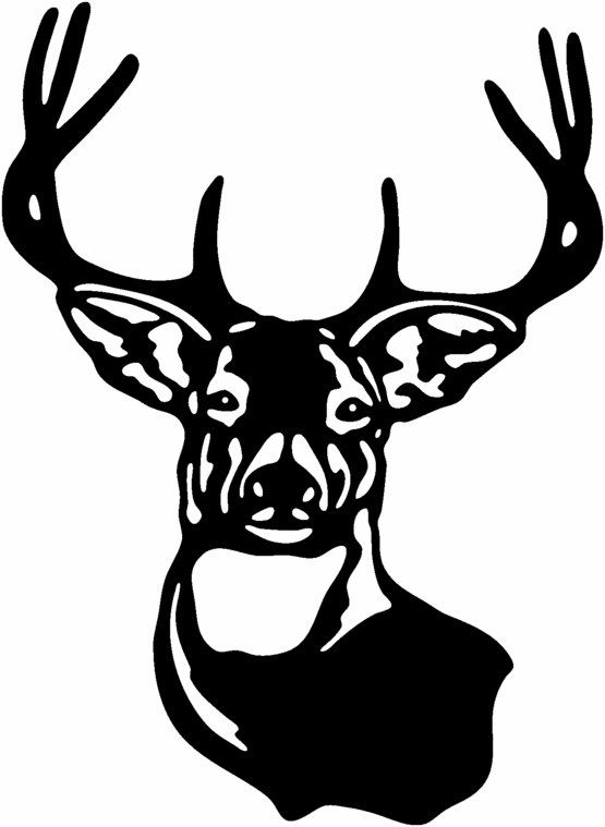 555x759 White Tailed Deer Clipart Stag Head Free Collection Download And