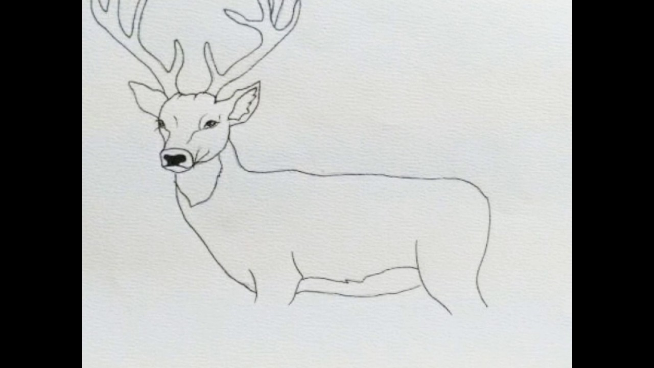 1280x720 White Tailed Deer Clipart Deer Head