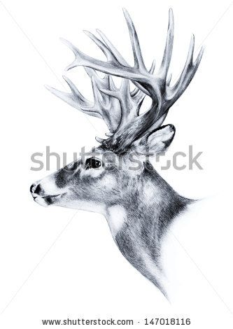333x470 Hand Drawn Image Of Big White Tail Buck Head With Large Antlers