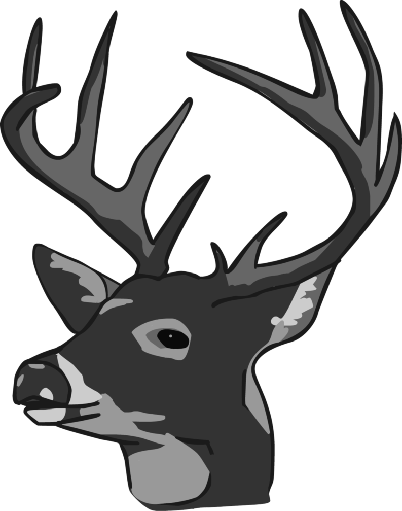 Whitetail Deer Vector