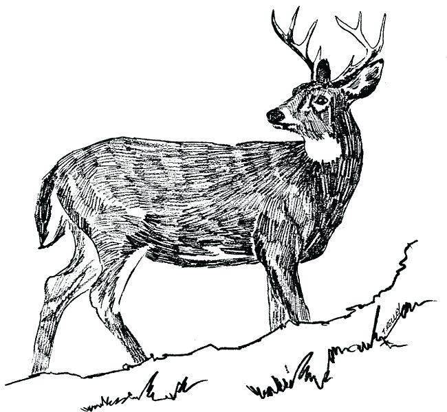 650x600 Deer Clip Art Free Deer Clip Art Free Deer Graphics Free Clip Deer
