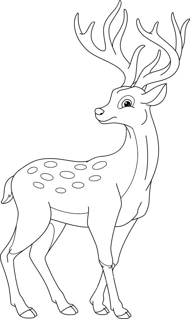 607x1022 Deer Coloring Picture