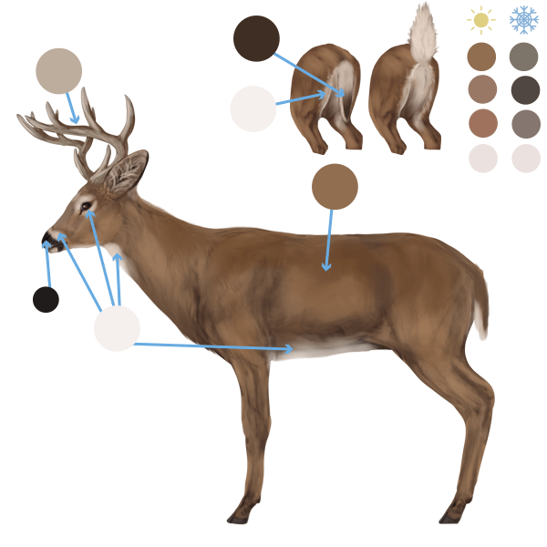 600x600 How To Draw Animals Deer