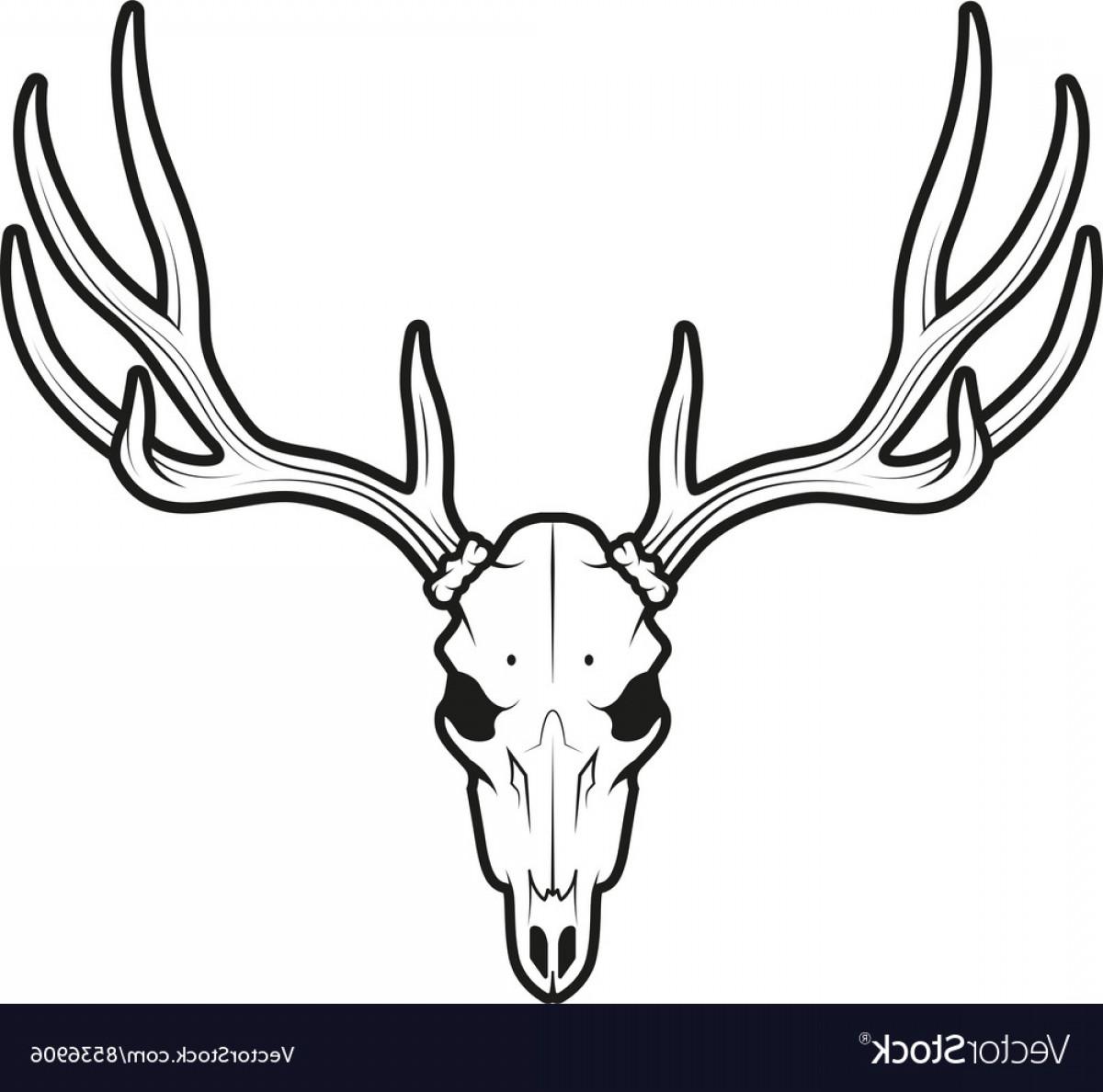 1200x1188 White Tail Deer Skull Vector Geekchicpro