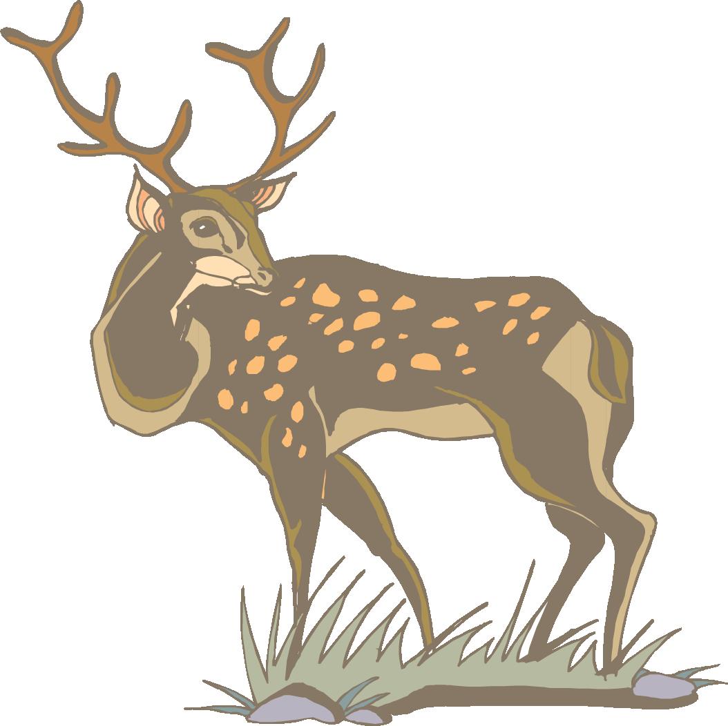 1054x1052 White Tailed Deer Antler Clip Art