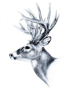 236x331 749 Best Whitetail Deer Images Wildlife Art, Deer
