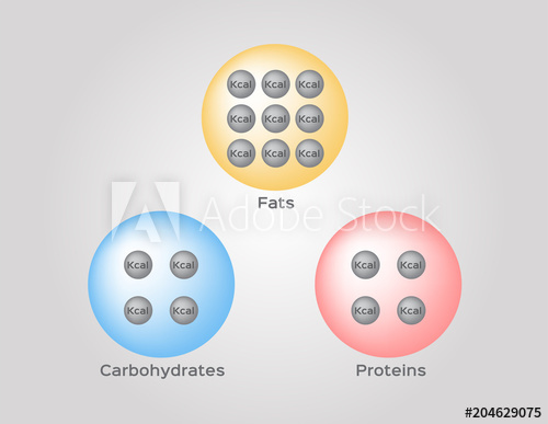 500x387 Calories Of Protein Fat And Carbohydrate Infographic Vector