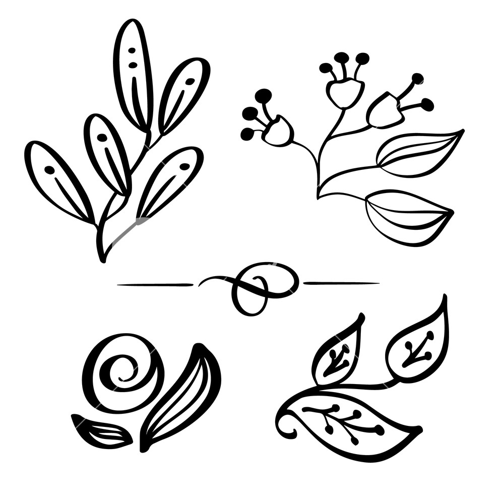 1000x1000 Set Hand Drawn Wild Flowers Branch Vector Drawing And Sketch With