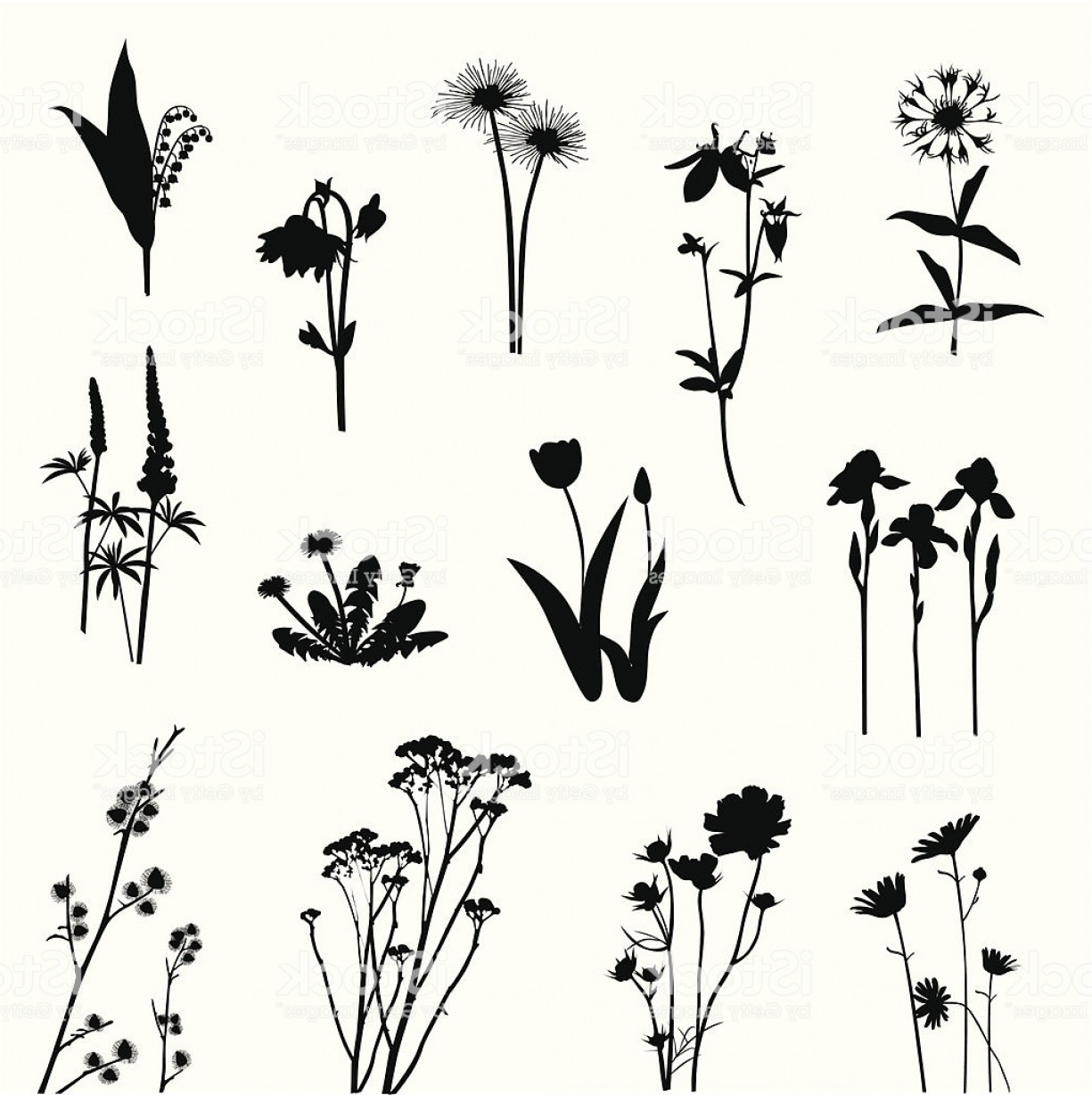 1225x1228 Wild Flowers Vector Silhouette Gm Lazttweet