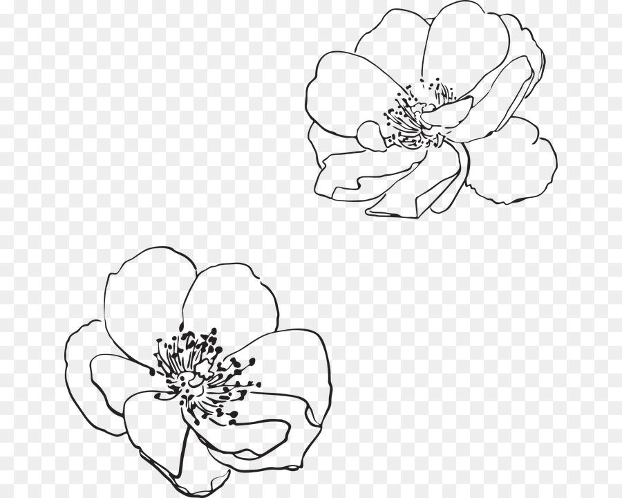 900x720 Line Art Drawing Flower Visual Arts Wildflower Vector