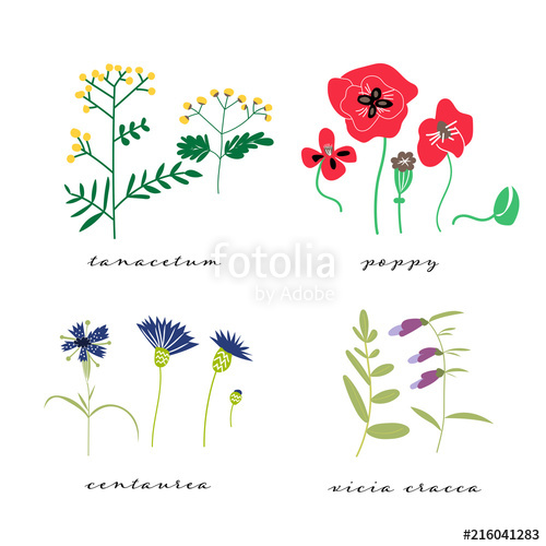 500x500 Wild Flowers Vector Illustration Set. Collection Of Meadow Plant