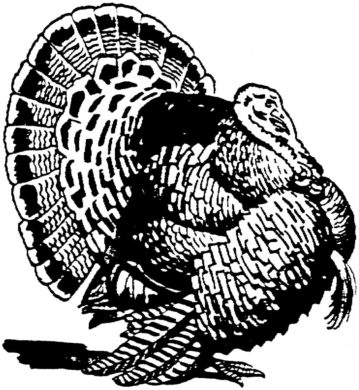 1334x1448 Turkey Vector Clip Rongholland
