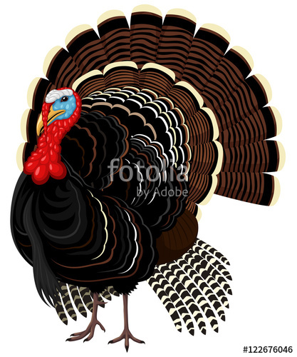 417x500 Vector Illustration Of A Male Wild Turkey. Stock Image And
