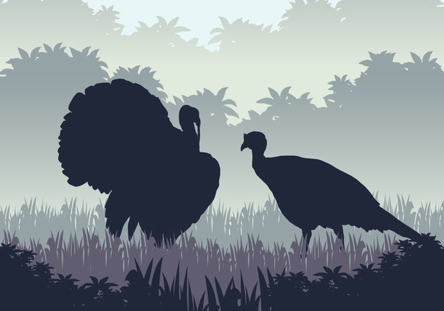 632x443 Wild Turkey Hunting Season Free Vector Download 417933 Cannypic