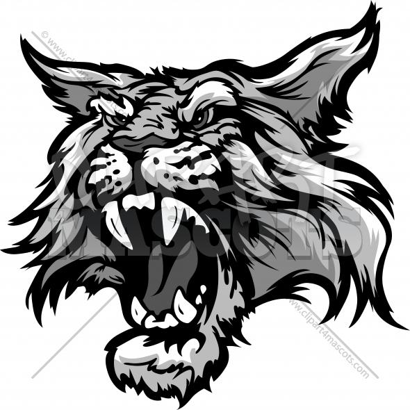 590x590 Wildcat Head Graphic Vector Cartoon