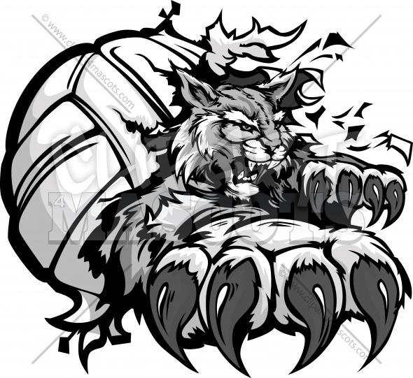 590x541 Wildcat Volleyball Clipart Graphic Vector Cartoon
