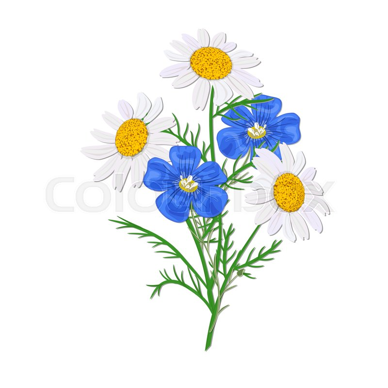 800x800 Daisy Or Chamomile Wildflower Isolated With Stem. Flax, Forget Me