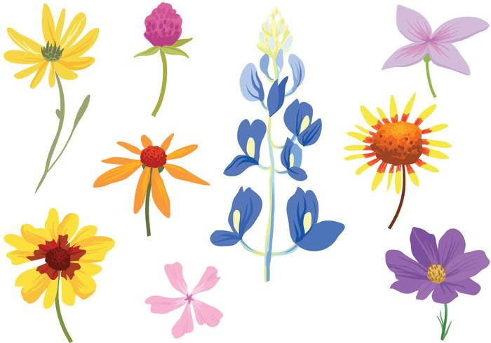 700x490 Free Colorful Wildflower Vectors