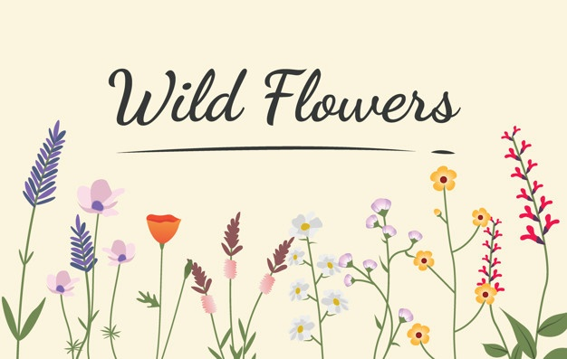 626x397 Wildflower Vectors, Photos And Psd Files Free Download