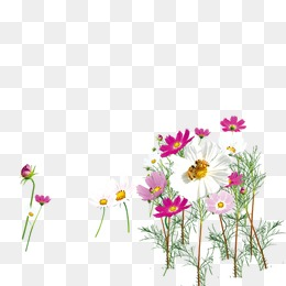260x260 Wildflowers Vector Png Images Vectors And Psd Files Free