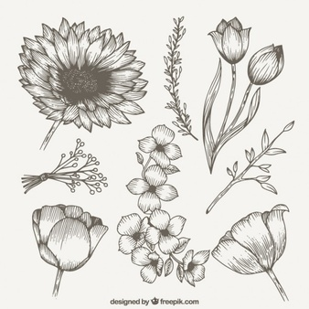 338x338 Collection Of Wildflower Drawing Images High Quality, Free