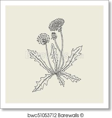 362x382 Art Print Of Elegant Outline Drawing Of Dandelion Plant With