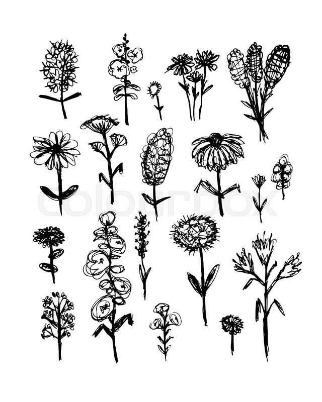 640x800 Collection Of Wildflowers, Sketch Fro Your Design. Vector