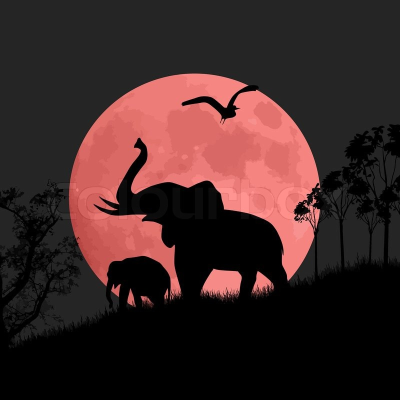 800x800 Silhouette View Of Elephants