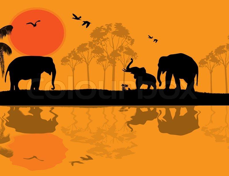 800x616 African Wildlife