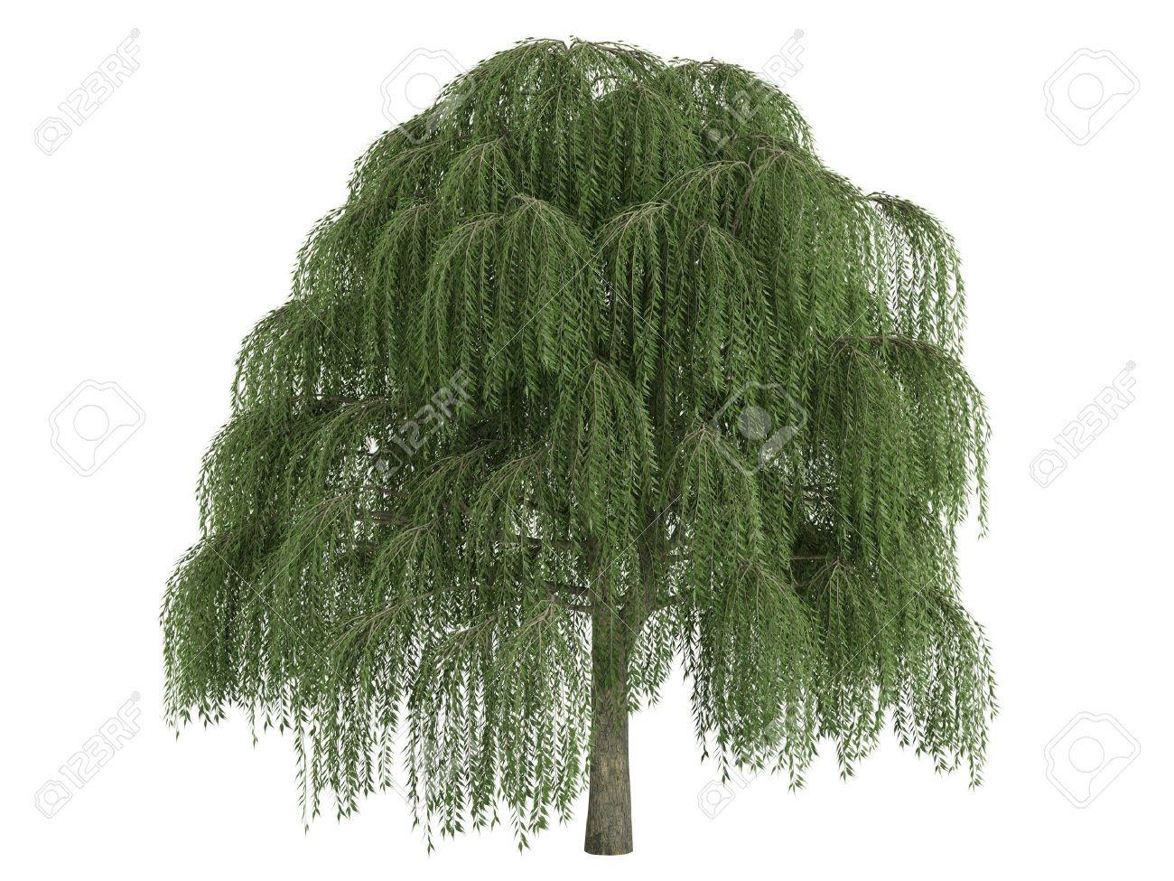1300x975 Primitive Willow Tree Vector