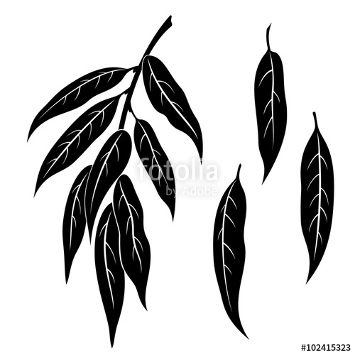 500x500 Set Of Plant Pictograms, Willow Tree Leaves, Black On White