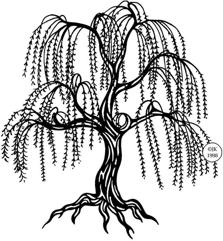 736x795 Weeping Willow Coloring Pages