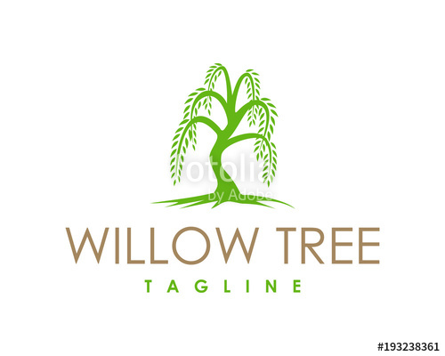 500x400 Willow Tree Symbol Logo Vector Stock Image And Royalty Free
