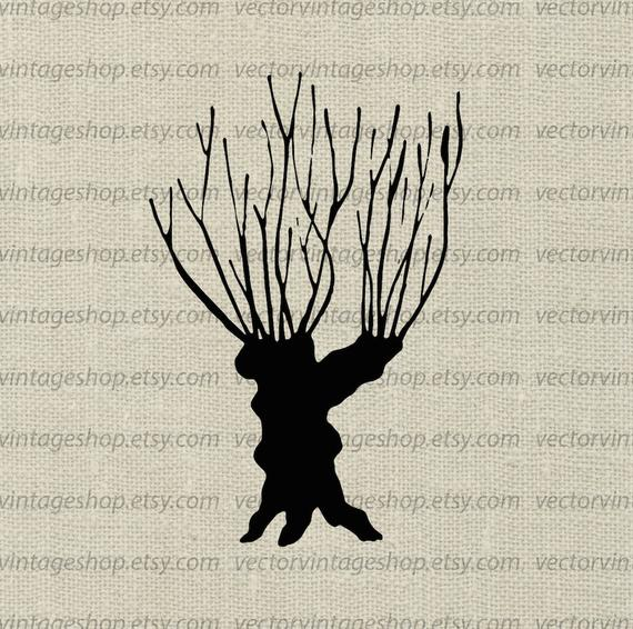 570x566 Willow Tree Vector Clipart Bare Tree Trunk Silhouette Clip Etsy