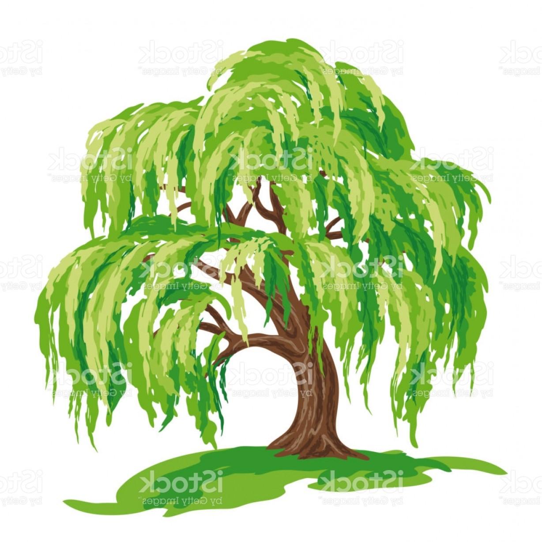 1228x1228 Willow Tree Vector Drawing Gm Orangiausa