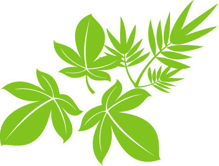 443x336 Willow Tree Leaf Free Vector Download (7,935 Free Vector) For