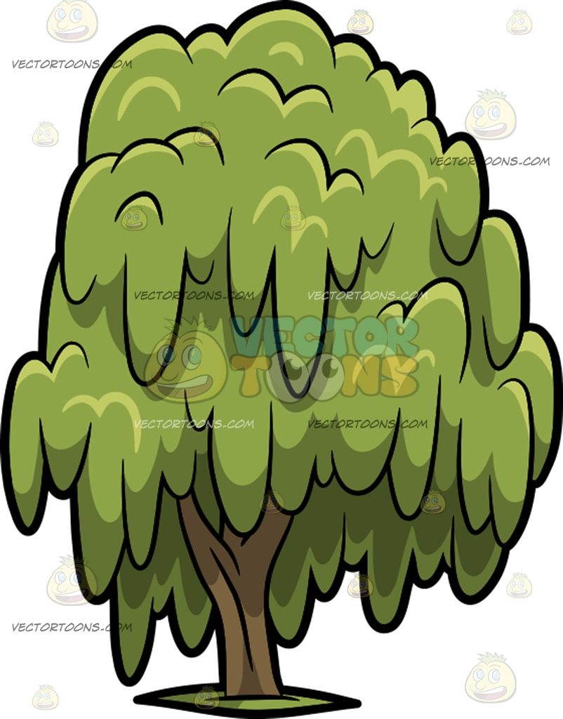 802x1024 A Willow Tree Clipart By Vector Toons
