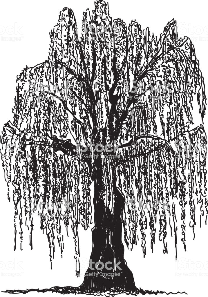 717x1024 Download Willow Tree Vector Clipart Weeping Willow Royalty Free