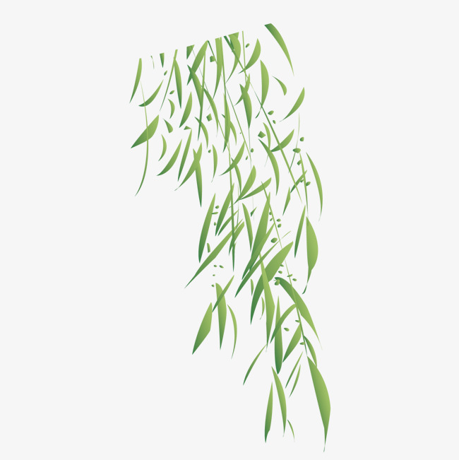 650x651 Green Willow Leaves Decorated Background, Ching Ming Festival
