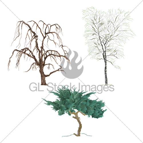 500x500 Old Trees Willow Mountain Cupressus And Birch Vector Gl Stock Images