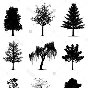 300x300 Stock Vector Vector Of An Oak Tree Silhouette Rongholland
