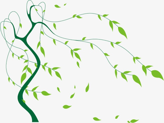 650x489 Swinging Willow, Willow, Swinging Vector, Willow Vector Png And