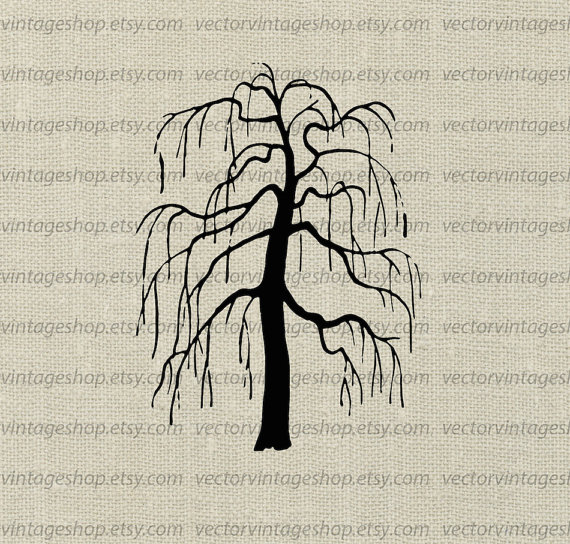 570x544 Weeping Willow Tree Vector Clipart, Bare Tree Silhouette Clip Art