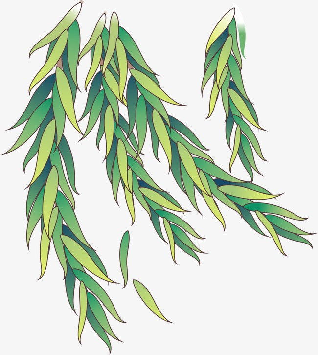 650x726 Willow, Vector, Ai Png And Vector For Free Download